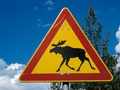 Road sign with elk.